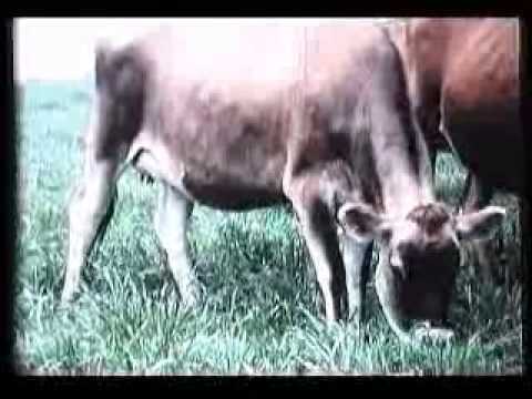 Dairy Farming in the 1960's full version !
