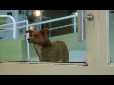 "FUNDACION ARGENTINA DE TRASPLANTE HEPATICO ""The Man and the Dog"""