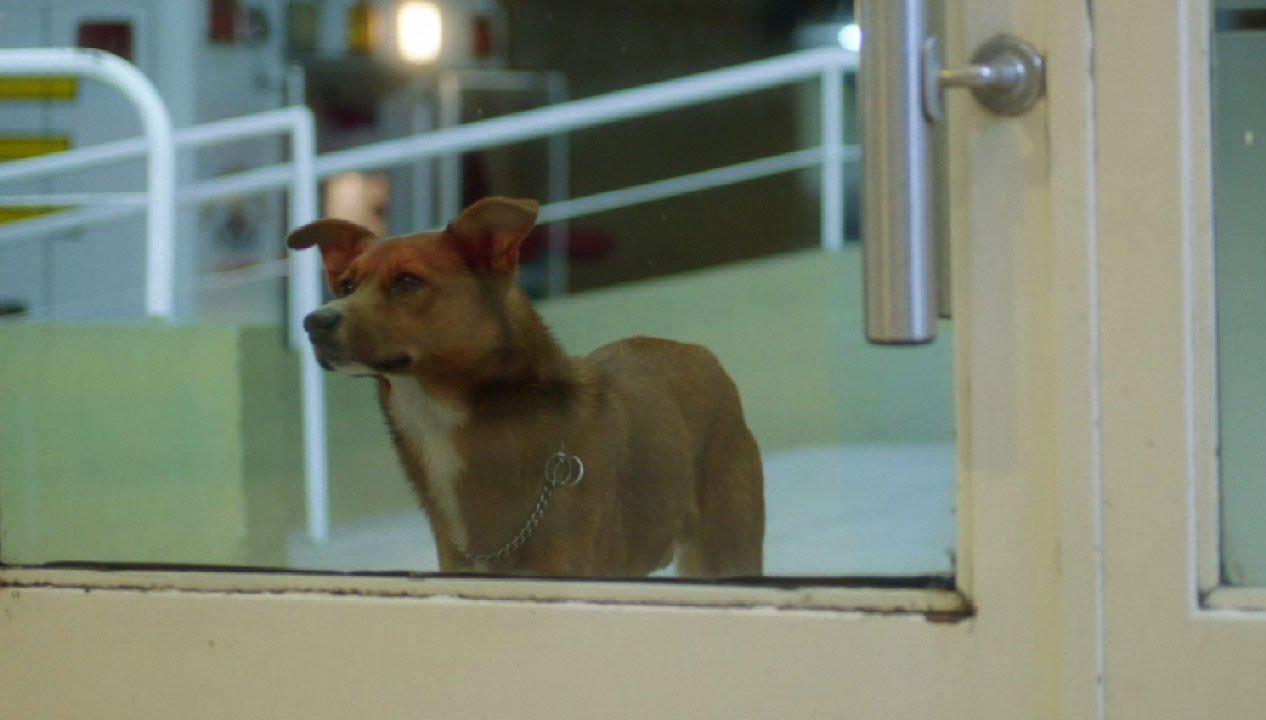 Fundacion Argentina De Trasplante Hepatico The Man And The Dog