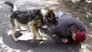 Training Personal Protection Dogs For Takedowns, 0-60, And Muzzle Attacks