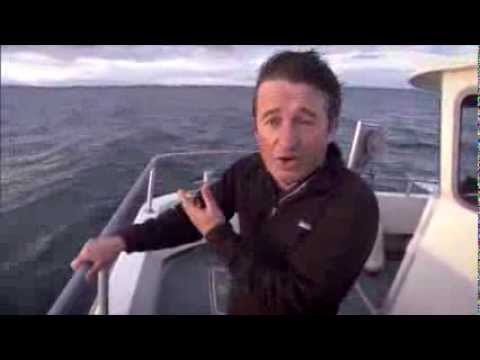 Filming humpback whales off Ireland's south coast with Cork Whale Watch