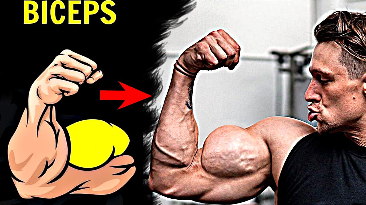 How To Get A Huge Biceps (12 Dumbbell Exercises)