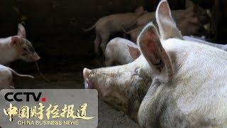 [中国财经报道]农业农村部:市场肉类供应总体有保障| CCTV财经