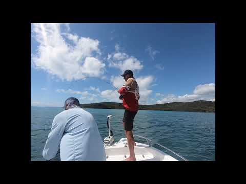 Black Spot Tusk Fish On Fly The Ultimate Challenge