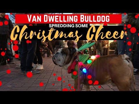 Van Life Christmas Special Starring DISCO The Bulldog | Santa Parade Victoria BC