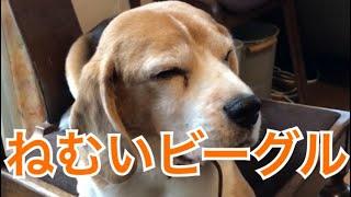 日曜の朝は眠いなあ〜まぶたが重いよ〜。 I'm sleepy on Sunday morning...