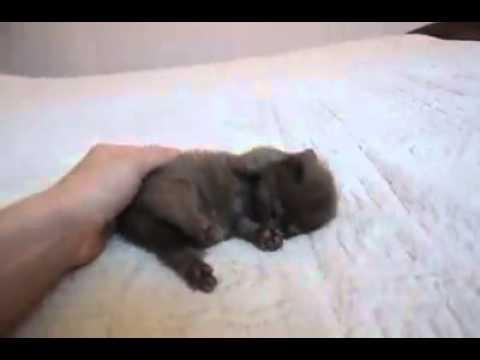 Le chaton le plus mignon du monde youtube - Chat tout mignon ...