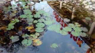 Маленькое путешествие по Швейцарии (фильм I )(Польша, Германия, Швейцария., 2009-09-23T14:46:36.000Z)