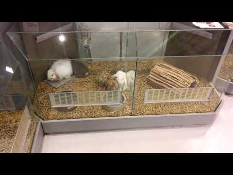 Konijnen in de Pets Place XL in Rotterdam Alexandrium.