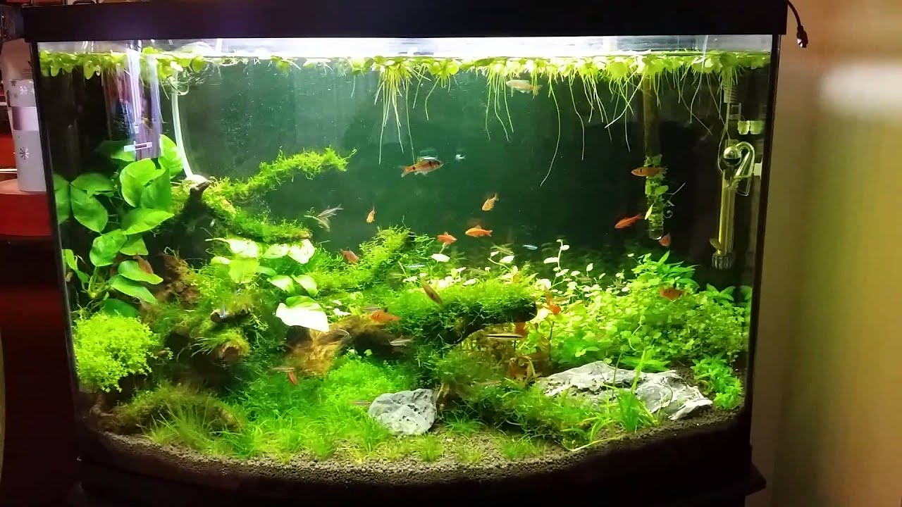 46 Gallon Bow Front Planted Tank - YouTube