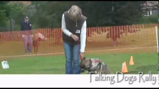 Watch My Chops Dog Training - Td Rally Demonstration