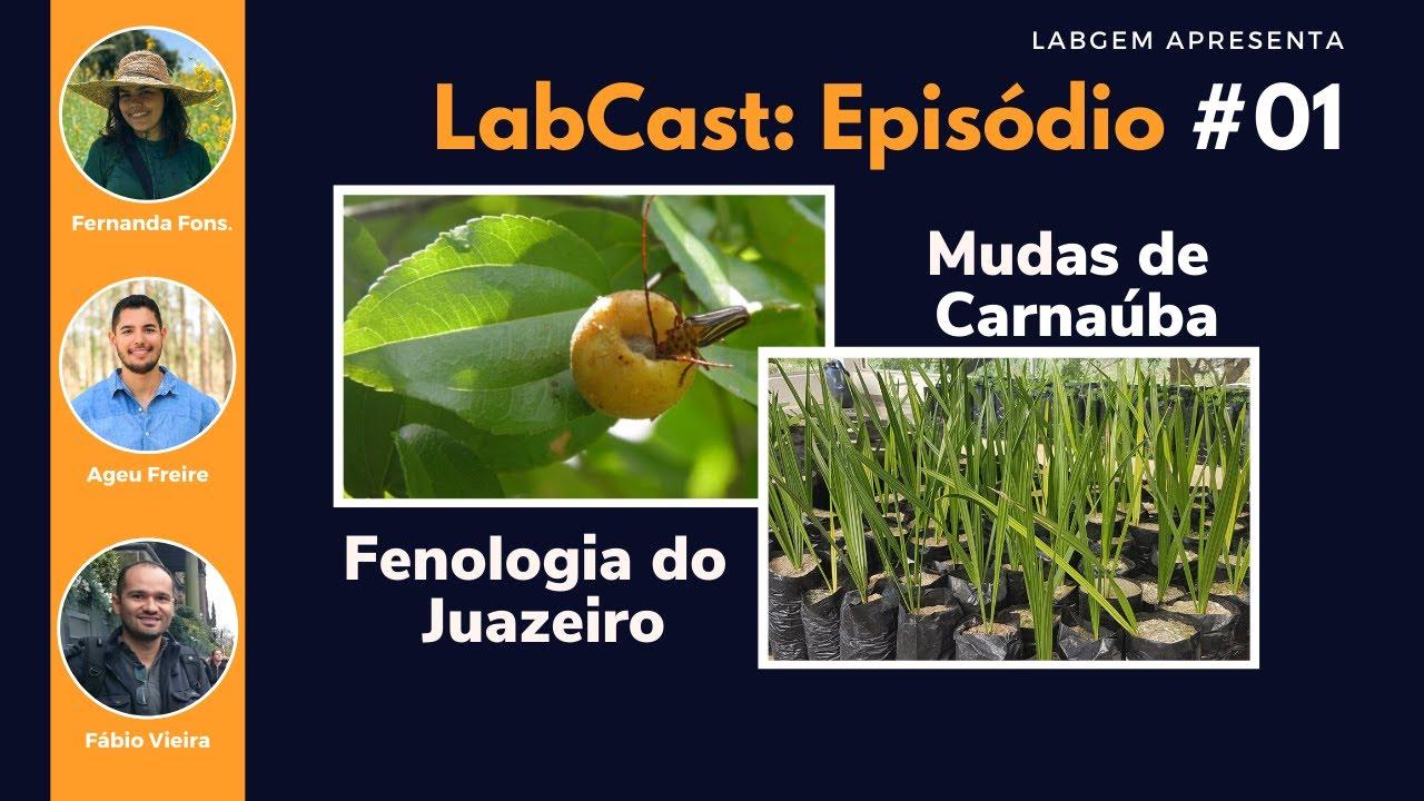 Fenologia do juazeiro e Produção de mudas da carnaúba – LabCast: Episódio #01