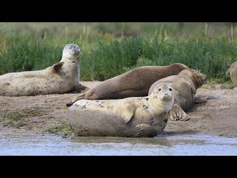 Annual survey shines a light on Thames Estuary's seals