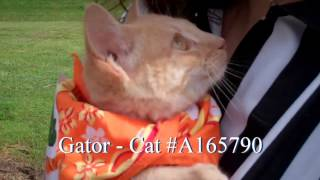 Osceola County Pets of the Week - Football and Furballs Championship Adoption Event