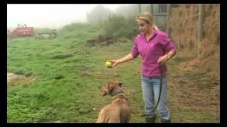 Dog Training Sitting