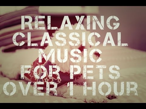 Relaxing Classical Music for Pets   Over 1 Hour