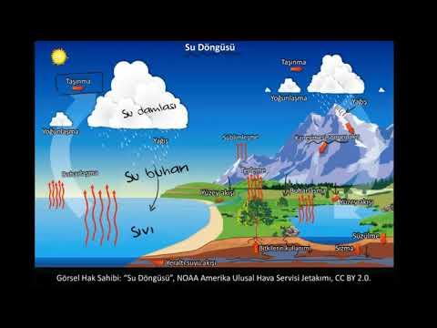 Su Dongusu Fen Bilimleri Fen Bilimleri Youtube