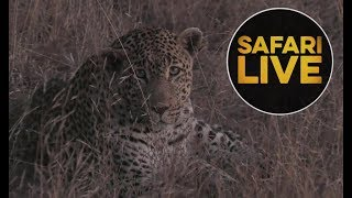 safariLIVE - Sunset Safari - July 10, 2018