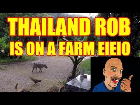 THAILAND ROB IS ON A FARM  E-I-E-I-O V295