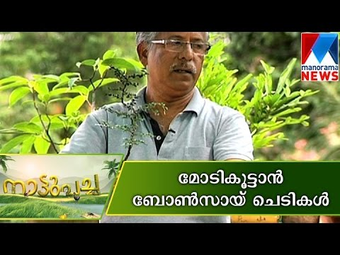 Bonsai plant Making | Nattupacha | Manorama News