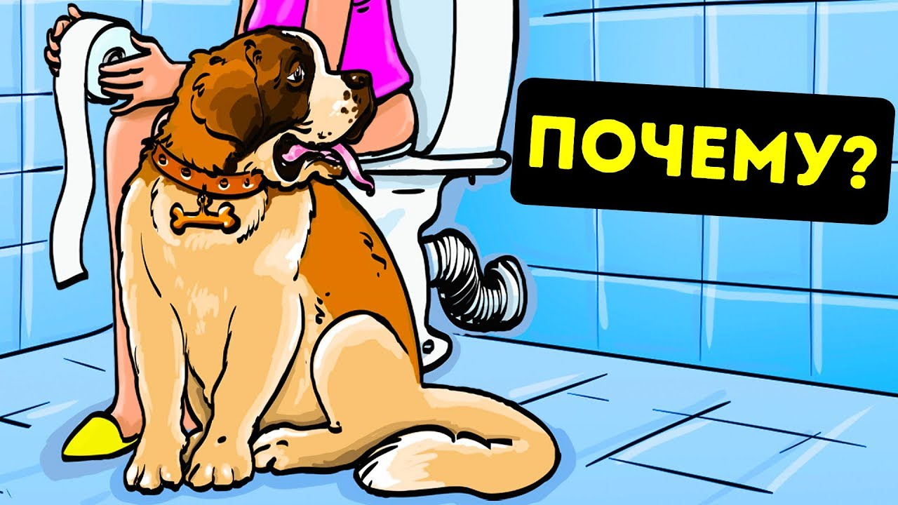 Почему Ваш Пес Всегда Ходит за Вами в Ванную