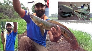 വരാലും ചെറുമീനും (Snakehead fishing with hand made frog lure)