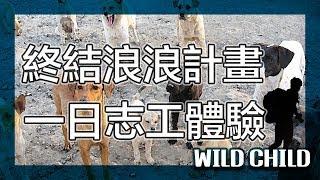 【 終結浪浪計畫】不再讓你孤單|節育減少流浪|懷生相信動物協會|流浪貓流浪狗|Taipei story|野孩子TV