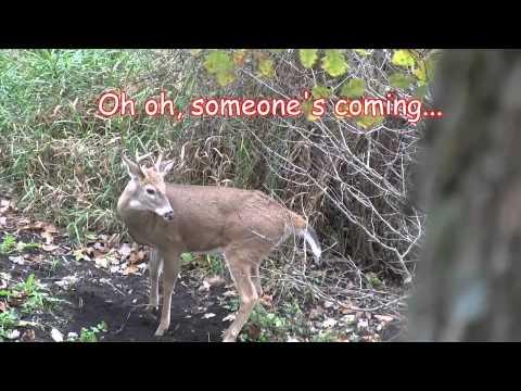 Whitetail Deer Funnel - Travel Corridor: An All Day Hunt
