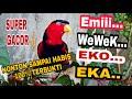 Masteran Burung Nuri Super Gacor Ngomong  Eko Wewek Emi Eka  Mp3 - Mp4 Download