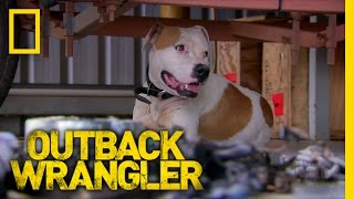 A Dog in the Outback | Outback Wrangler