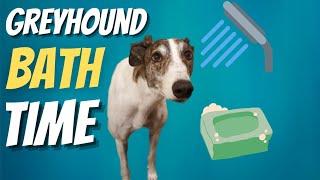 Greyhound Bath Time