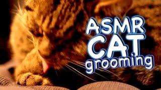 ASMR Cat - Grooming #27 - Red