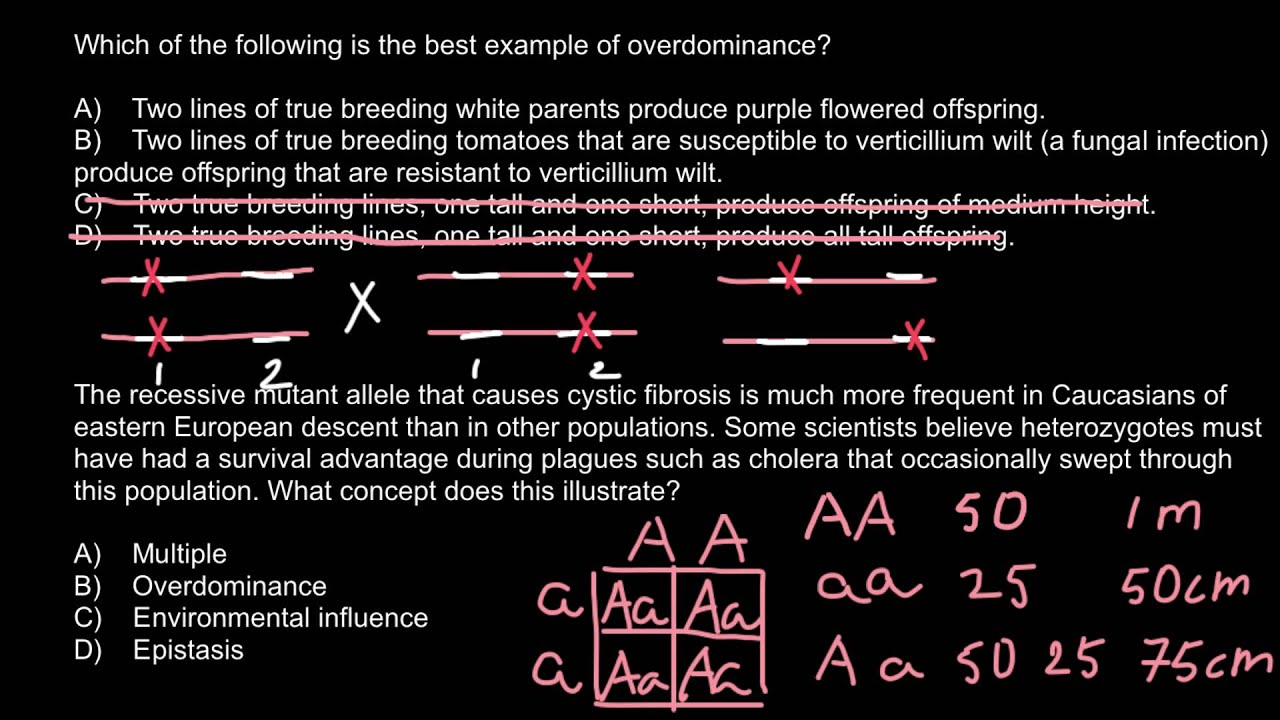 What Is Overdominance And What Is Epistasis Youtube