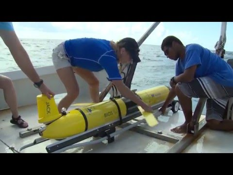 Gliders: A New Era in Oceanography at BIOS