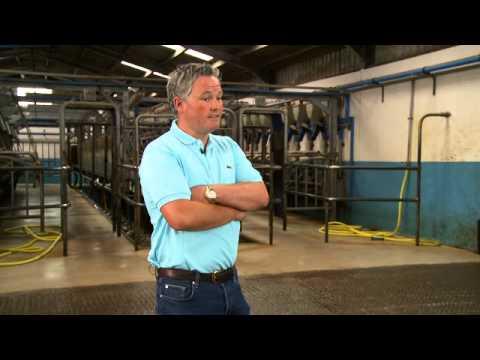 Dairy cow health and breeding management - HerdInsights
