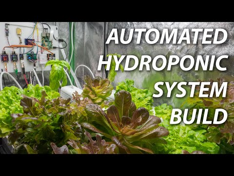 Building An Automated Hydroponic System