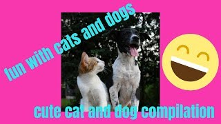 fun with cats and dogs | cute cat and dog compilation