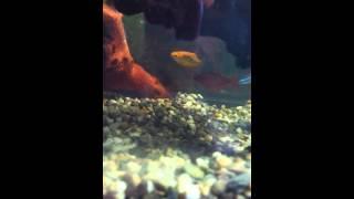 64litre Tropical Aquarium With Bog Wood