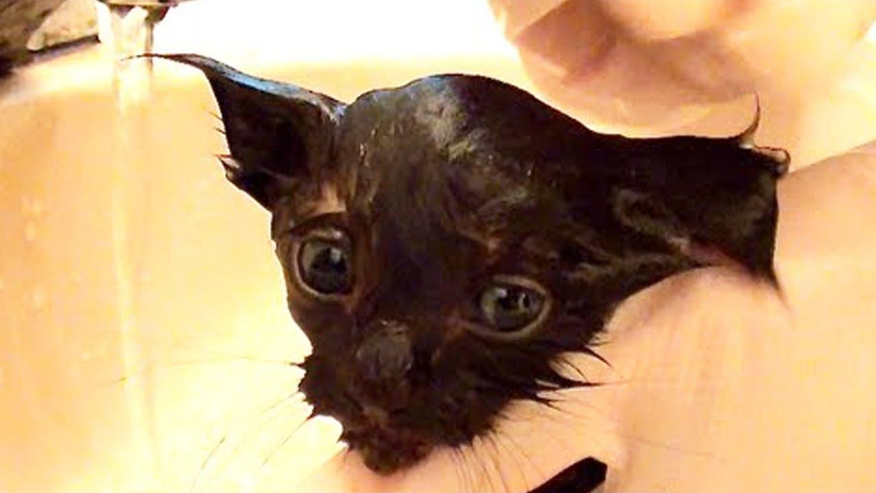 Meet COLE the Black Cat