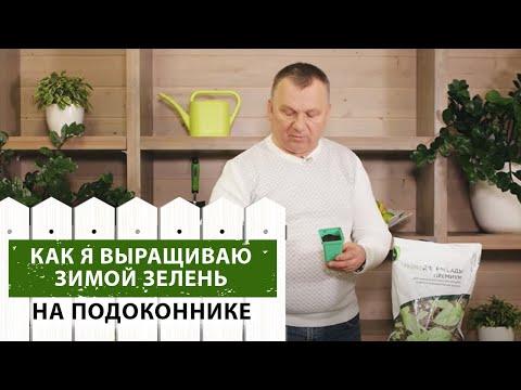 Как вырастить зелень зимой на подоконнике