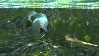 Анимация рыбок