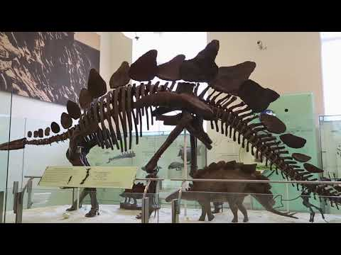 Things To Do In New York City - American Museum Of Natural History