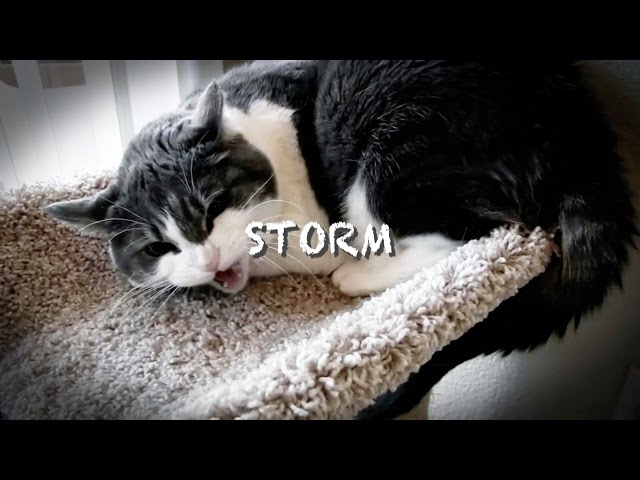 Storm's Last Chance | My Cat From Hell