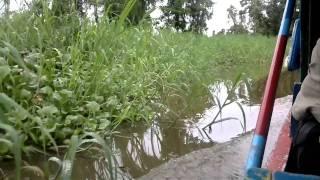 agusan marsh croc territory shot on nokia n8