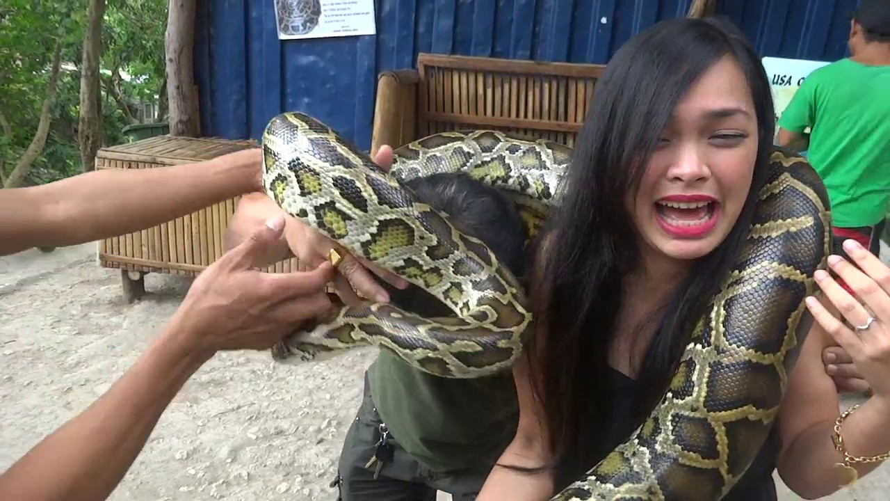 Cebu Zoo Snake Massage Adventure