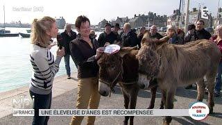ANIMAUX : Le Cotentin, l'âne de la Manche par excellence