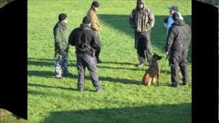 Lakeview K9 Academy - Police Service Dog Training