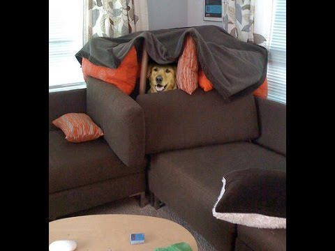 When You Need To Build A Pillow Fort Youtube