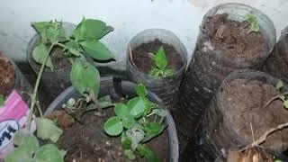 Reuse ใช้ซ้ำ | ปลูกผัก