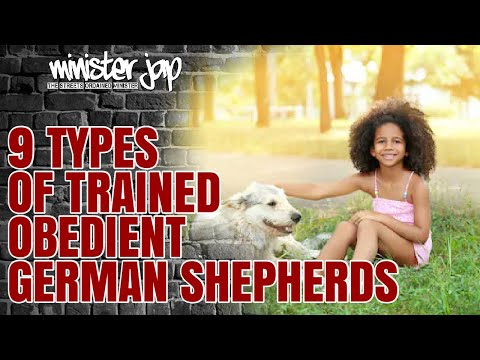 9 Types Trained obedient German Shepherds